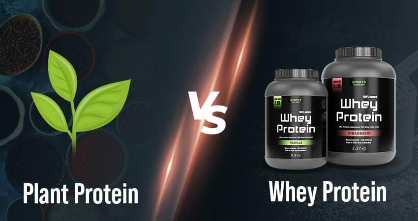 Plant Protein VS. Whey Protein: Which is a Better Supplement?